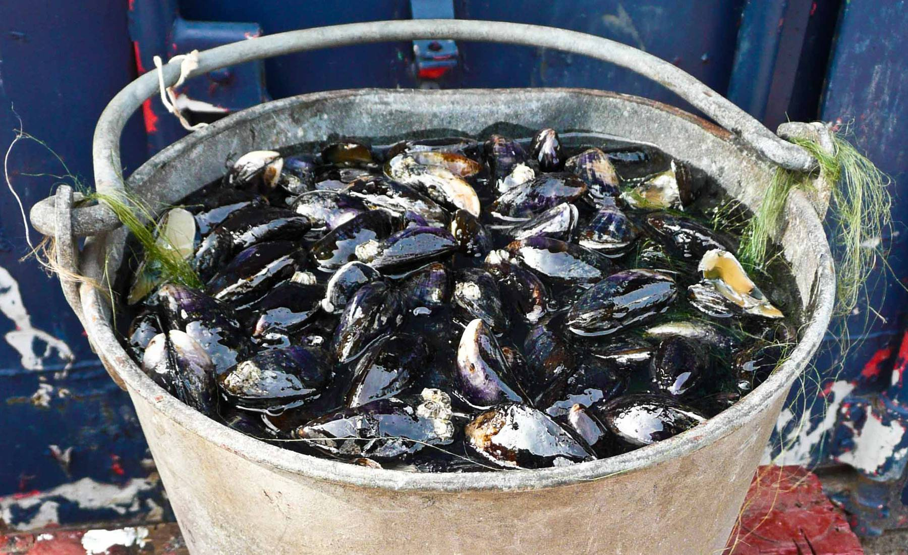 mussels, bucket, fake food, s.s Great Britain, dry dock, victorian mussel pickers